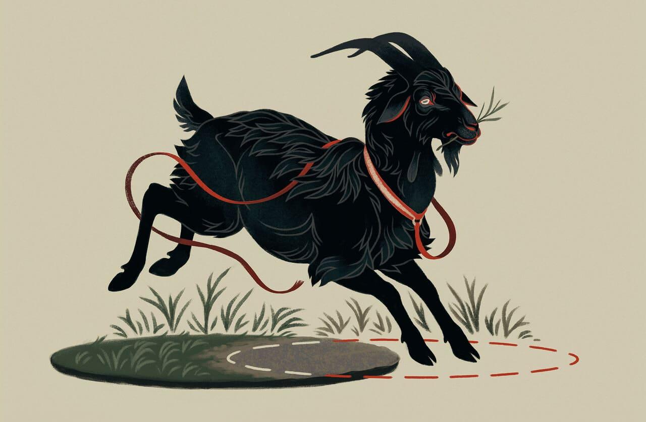 Goat-Problem_2600_Lede.jpg